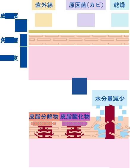 図 フケ・かゆみの発生メカニズム